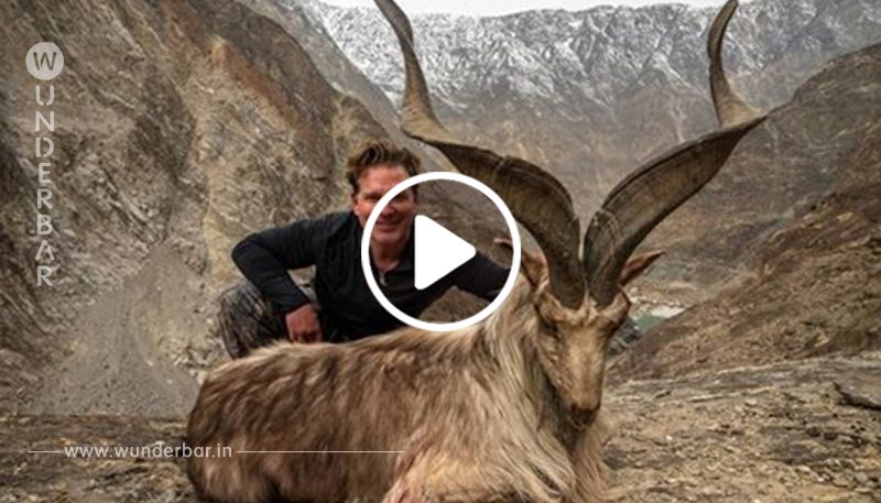 Jäger zahlt 110.000 US-Dollar für Abschuss einer seltenen Bergziege