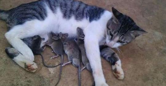 18 stolze Katzen-Mamas.