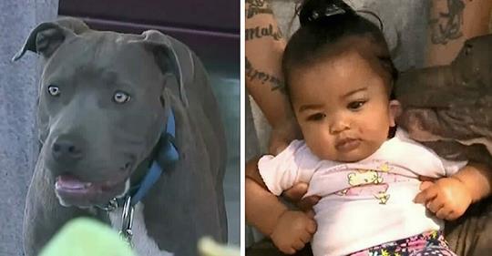 Mutter sieht Pitbull der Familie, wie er das 7 Monate alte Baby an der Windel zieht, nachdem Haus in Flammen aufgeht