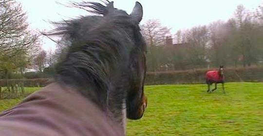 Pferd trifft nach 4 Jahren wieder auf seine besten Freunde – sieh dir die erstaunliche Reaktion an