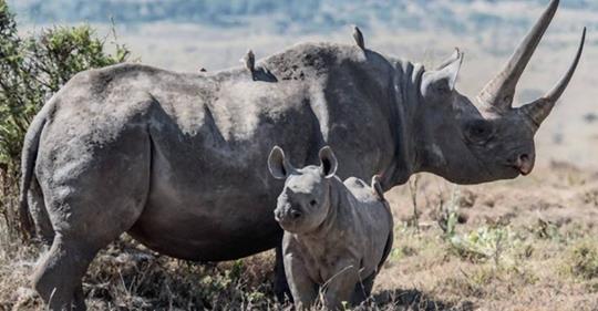 Wilderer in Kenia bekommen jetzt die Todesstrafe
