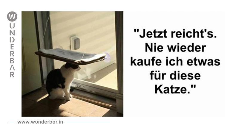 Katzen, die nicht zu den Klügsten gehören.