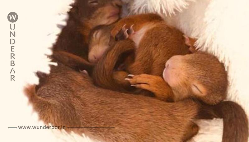 IHRE MAMA WURDE ÜBERFAHREN Eichhörnchen Babys vor dem sicheren Tod gerettet
