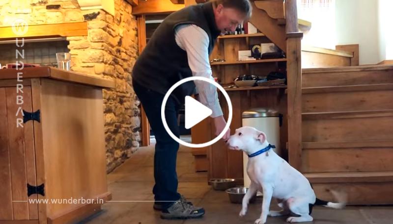 Ausgesetzter Hund Snoop hat endlich ein Zuhause, nachdem seine Geschichte überall die Herzen brach