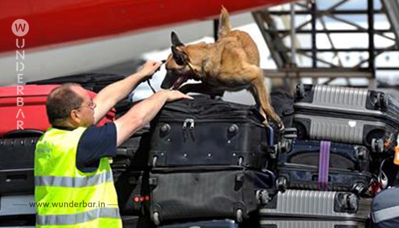 MASCHINEN SOLLEN SCHNÜFFEL ARBEIT ÜBERNEHMEN! Flughafen schafft  Sprengstoff Hunde ab