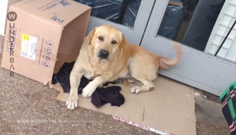 Trauernder Hund wartet seit Wochen im Krankenhaus auf Herrchen, ohne zu wissen, dass er starb