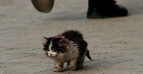 Verstoßene Straßenkatze kämpft ihren letzten Kampf.