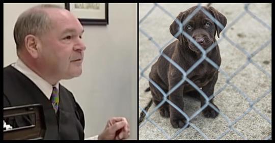 Dieser clevere Richter dreht den Spieß um, indem er den Tierquälern eine Dosis ihrer eigenen Medizin verabreicht