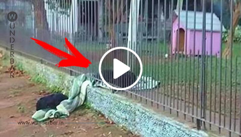 Hündin trägt ihre neue Decke nach draußen, um sie mit einem frierenden obdachlosen Hund zu teilen