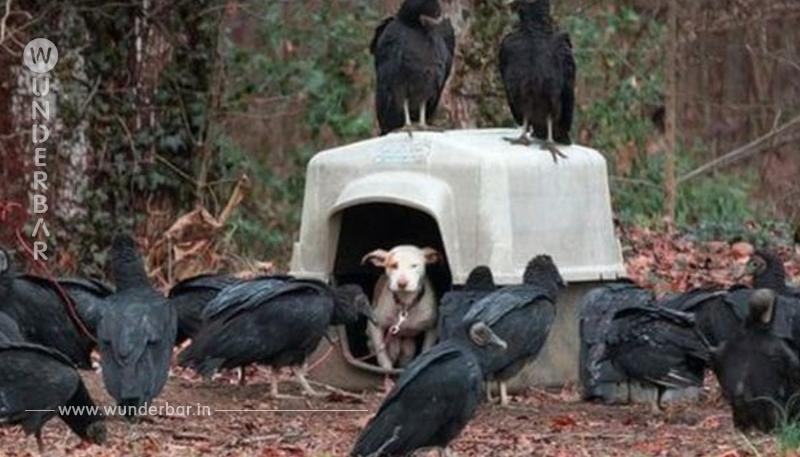 Retter setzen zum Sprint an, als sie die Kreaturen neben dem Hund sehen
