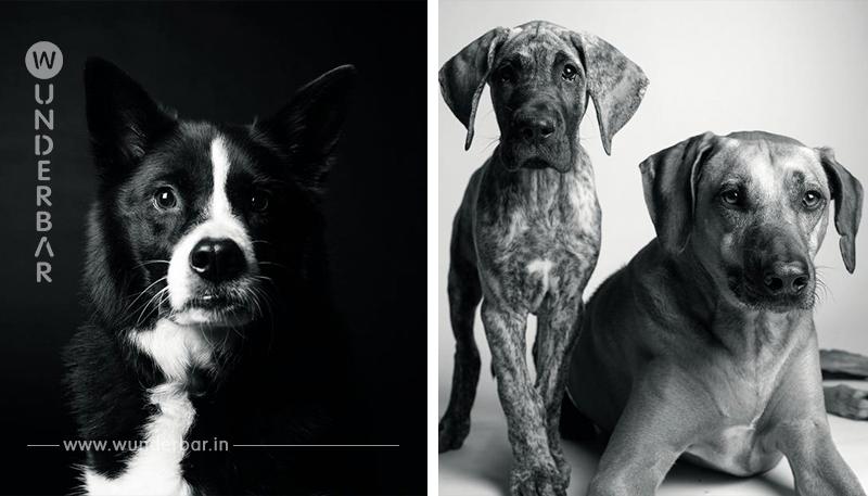 Berührendes Fotoprojekt zeigt, wie schnell Hundejahre vergehen