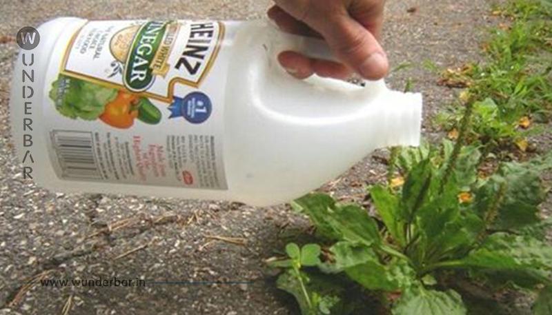 7 überraschende Dinge, die man mit Reinigungsessig machen kann!