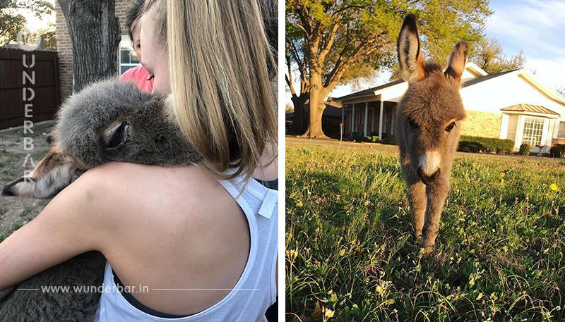 Teenager rettet Baby Mini Esel das Leben.