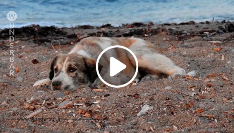 Ein verlassener Hund jagt Autos hinterher, voller Verzweiflung auf der Suche nach entgegengebrachter Liebe