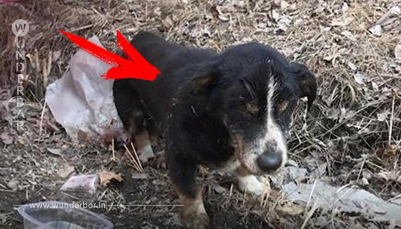 Osterwunder! Familie begräbt ihren toten Hund   ein Tag später steht er wieder auf