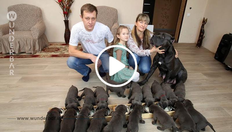 Mega Wurf: Russische Familie flippt völlig aus, als sie die Welpen zählt!