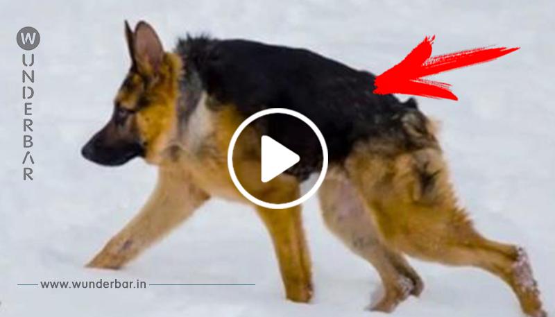 Krüppel Hund: Quasimodos Schicksal lässt niemanden kalt