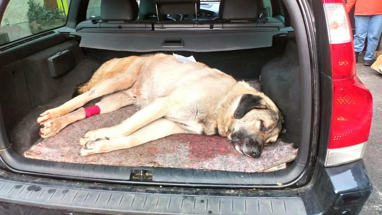 Sachsen: Hund erstochen, zweites Tier lebensgefährlich verletzt