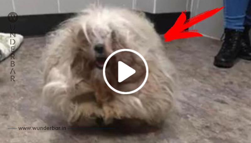 Besitzer bringt Hunde ins Tierheim, um sie einschläfern zu lassen, doch sie entscheiden sich dazu, ihnen ein Makeover zu verpassen