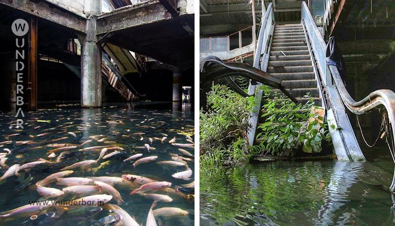 15 Fälle, in denen die Natur sich ihren Platz zurückerobert hat.
