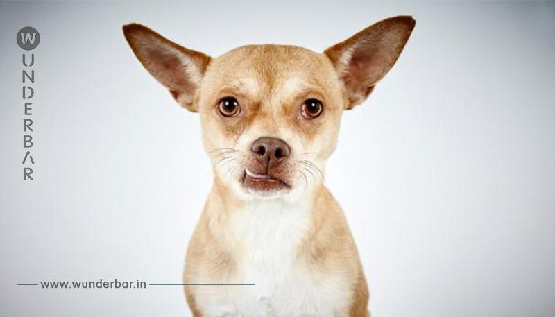 Berührende Porträts von herrenlosen Hunden