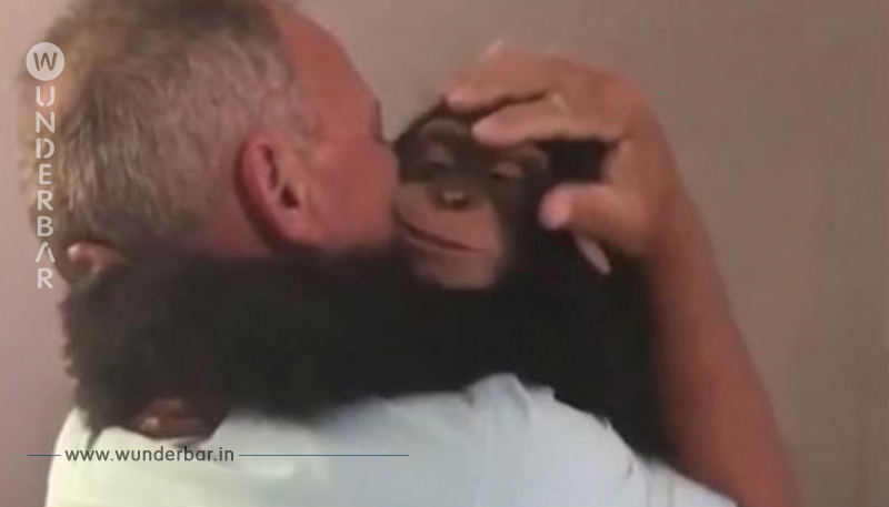 Das geht ans Herz: Schimpanse sieht Pflegeeltern wieder