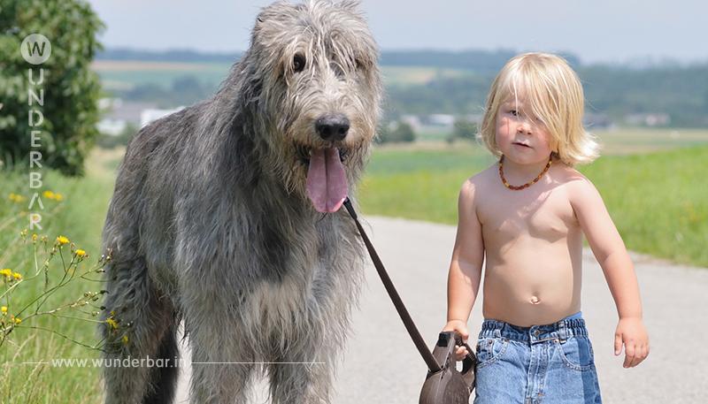 Junge verabschiedet sich rührend von seinem Hund