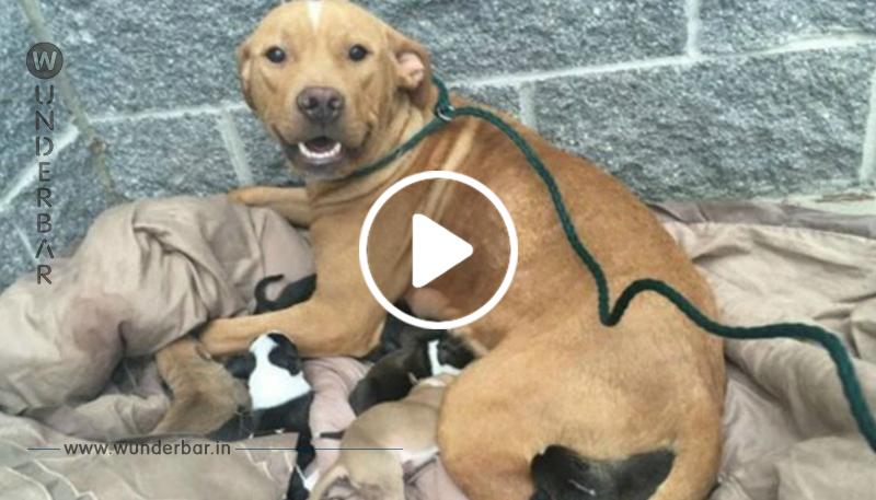 Mit 10 Hundebabys ausgesetzt: Verzweifelte Hundemama tut das Undenkbare