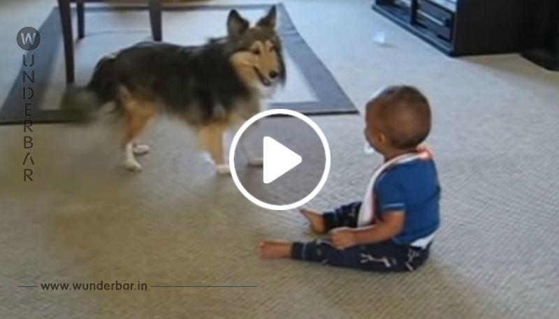 Mutter hat Tränen in den Augen, als sie sieht, was ihr Hund mit ihrem Baby macht