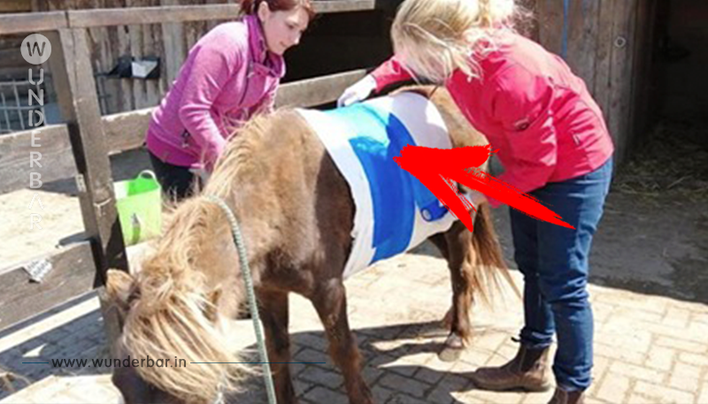 POLIZEI JAGT TIERQUÄLER Pony Paul den Bauch  aufgeschlitzt