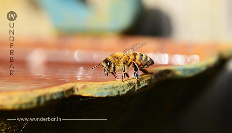 Bienentränke: So einfach bauen Sie eine Wasserstelle für Insekten