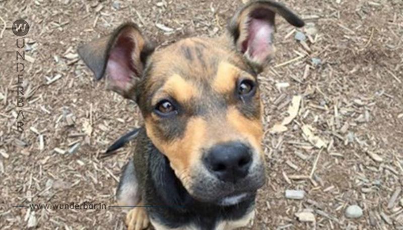 Frau will nervigen Hund gegen iPhone tauschen, doch es verläuft nicht wie geplant