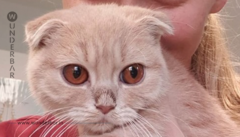 Tierheim platzt endgültig der Kragen, als ein Paar diese Katze abgibt