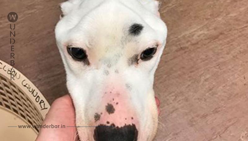 Todkranker Hund beim Tierarzt: Das Röntgenbild entpuppt sich als Drama!