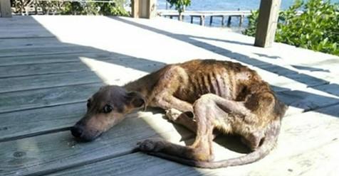 Auf einsamer Insel: Unterernährter Hund kurz vor dem Tod, bis Schutzengel in letzter Minute auftaucht
