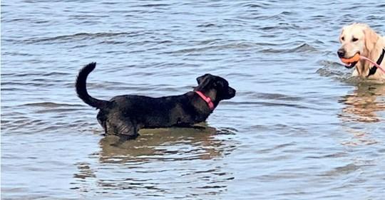 Schau mal, so wurde ich zum Seehund!