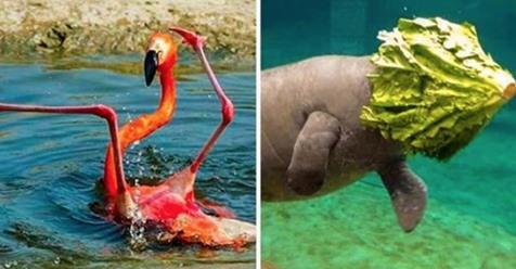 15 lustige Bilder von tollpatschigen Tieren.