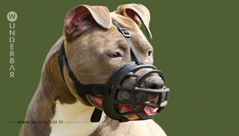 Leimen (Ba. Wü.): 2 Kampfhunde zerfleischen Gesicht von Jugendlichem (15)