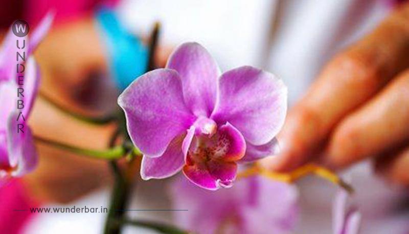 Orchideen pflegen: Mit diesen Tipps gedeihen sie prächtig