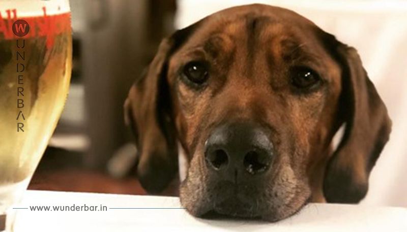 Bier für Hunde: Harmlos oder schädlich?