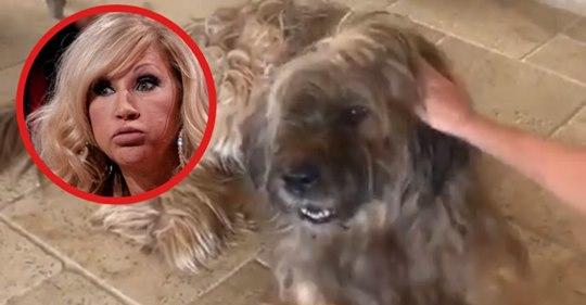 Carmen Geiss: Nach Tierquälerei kommt es knallhart für die Millionärs Blondine!