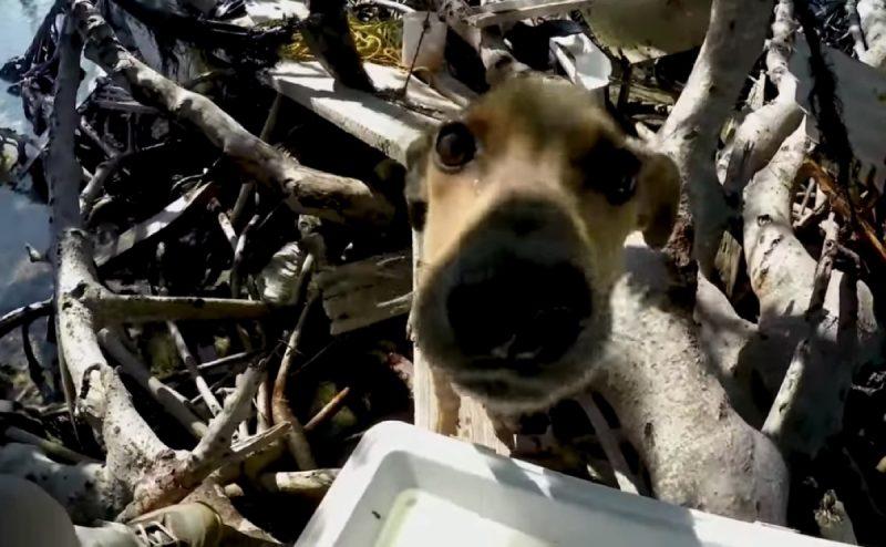 Tourist findet halb verhungerten Welpen auf einsamer Insel.