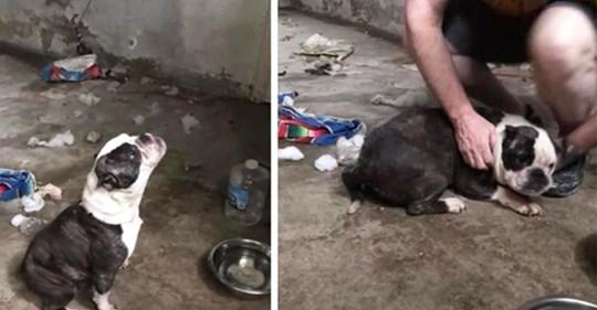 Das traurige Winseln eines einsamen Hundes führen die Retter zu einem verschlossenen Keller
