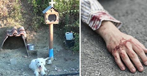 Griechenland: Seit über einem Jahr wartet Hund an bestimmter Stelle – dort war sein Herrchen ums Leben gekommen