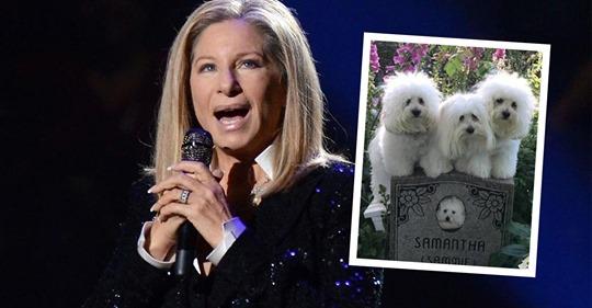 Das irre Leben von Barbra Streisands Klon-Hunden