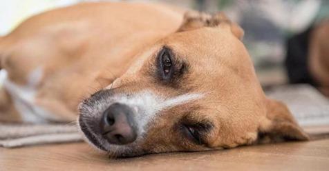 Hund weckt sein Herrchen aus dem Koma auf - und ist seitdem als Heiler gefragt