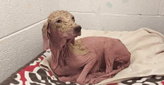 Er rettet einen Hund vor dem Tod: Ihr Wiedersehen ein Jahr später haut alle um!