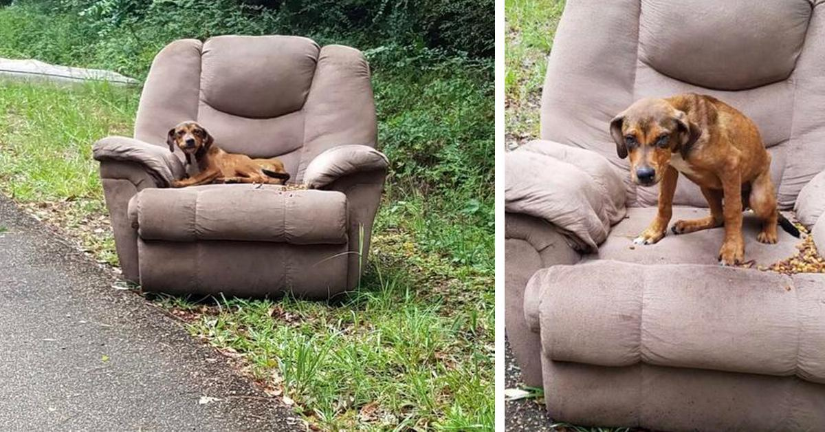 Herzlose Besitzer überlassen Hund seinem Schicksal