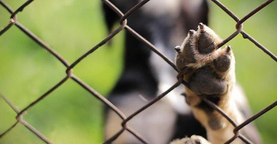 Ansturm vor dem Urlaub: Circa 70.000 Tiere in Heimen abgegeben