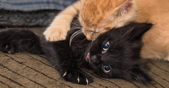 Hoffnung für Allergiker: Schon bald soll es einen Impfstoff gegen Katzenallergie geben